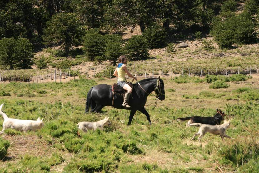 Horses & Huskies de losPehuenes