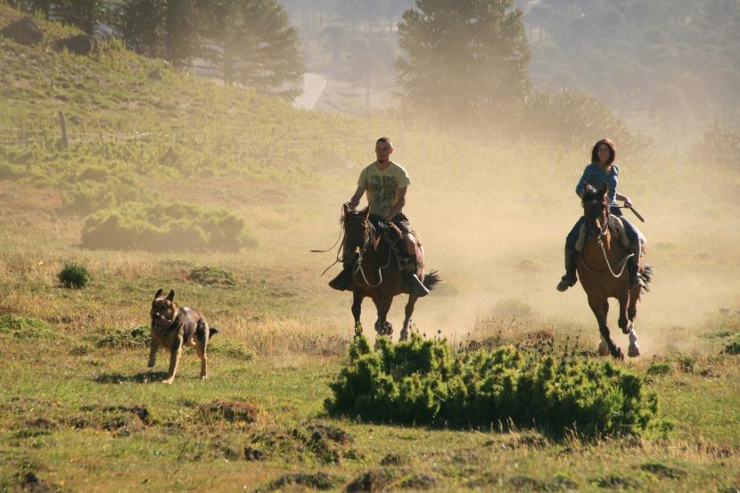 Horses & HuskiesPatagonia